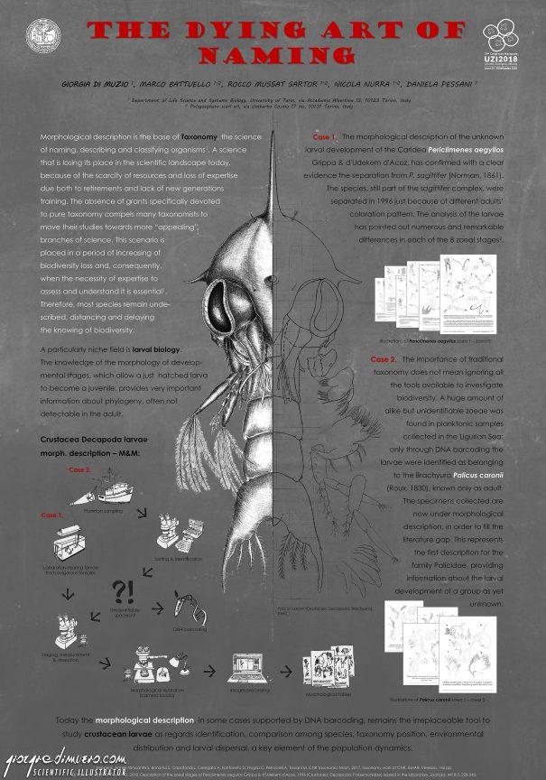 portfolio_posters_uzi_taxonomy_scientific_illustration_giorgiadimuzio_02