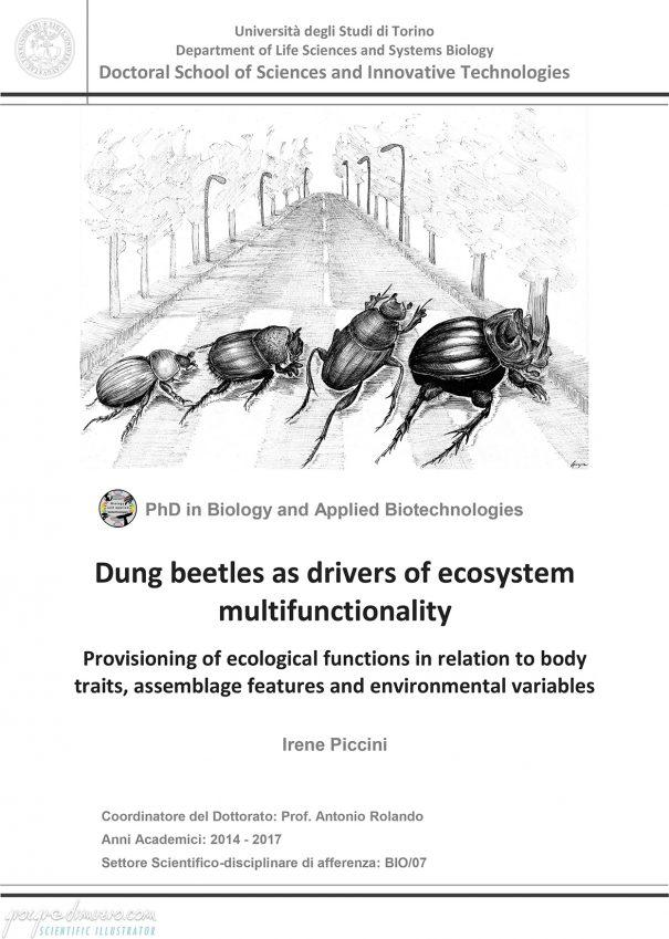 portfolio_thesis-covers_dung_beetles_scientific_illustration_giorgiadimuzio_01