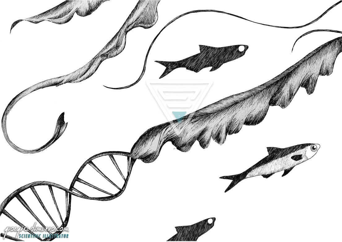 portfolio_traditional-art_jellyfish_fishbone_scientific_illustration_giorgiadimuzio_03