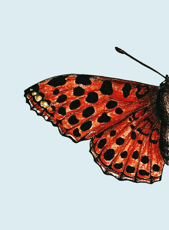 home_butterflies-caterpillars_scientific_illustration_giorgiadimuzio