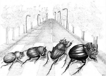 portfolio_thesis-covers_dung_beetles_scientific_illustration_giorgiadimuzio
