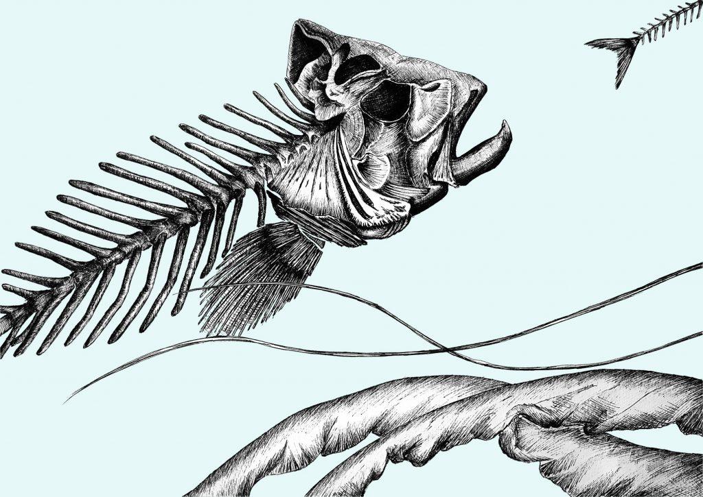 home_traditional-art_jellyfish_fishbone_art_scientific_illustration_giorgiadimuzio