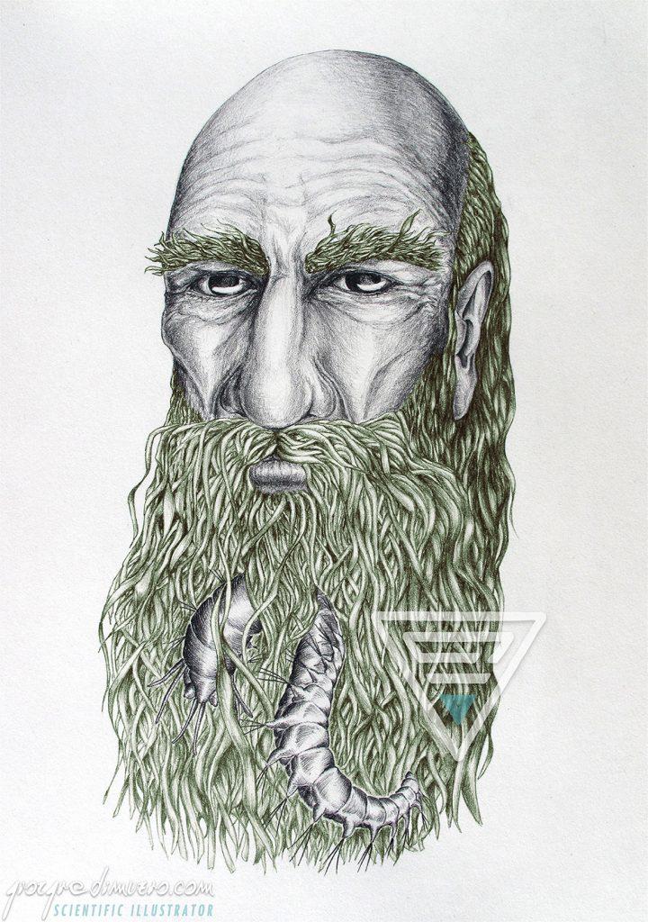 in-progress_nereo_nereis_myth_scientific_illustration_giorgiadimuzio