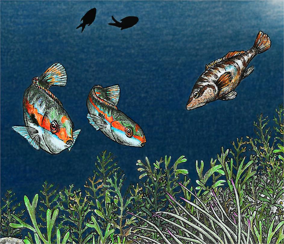 lithophaga_date_mussel_illegal_harvesting_scientific_illustration_giorgiadimuzio