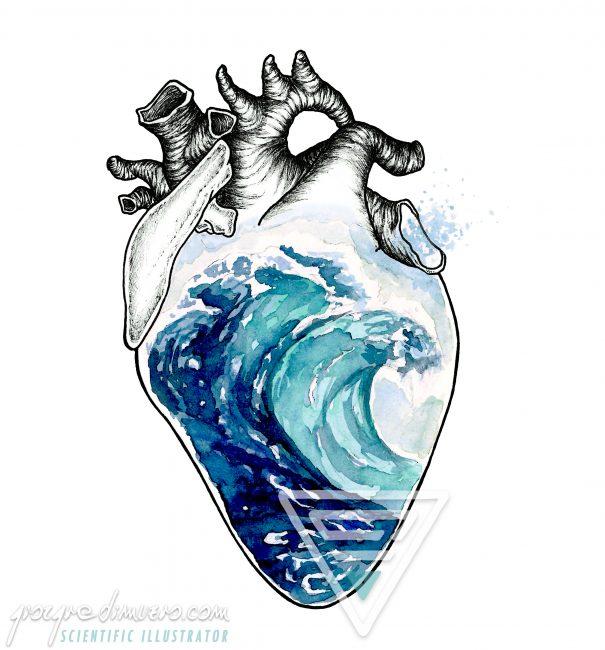 portfolio_oceano_corpo_ocean_heart_scientific_illustration_giorgiadimuzio
